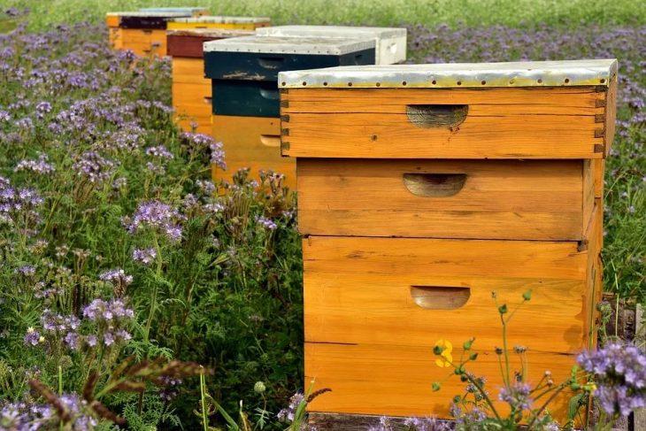 Feuille de cire d'abeille